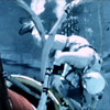 EVA Simulation : Durring the mid to late 1960s a small company by the name of Environmental Research Associates (ERA) made major contributions to the success of the U.S. space program. This small business, owned and operated by Harry Loats and G. Samuel Mattingly proposed and pioneered the use of water immersion to simulate the weightlessness of space. The methods developed by ERA provided a versatile earth based platform for evaluating various harware concepts and configurations intended for spaceborne operations and for testing and rehersing manned tasks before their execution in the space environment, particularly extravehicular activity (EVA) tasks otherwise known as space walks. The photos shown here are provided courtesy of Sam Mattingly and cover two distinct periods of time separated by approximately 5 decades. The first set of photos cover a period from 1964 to 1969 and document the activities of ERA in their genisis of the neutral buoyancy / water immersion technique.  Many of these photos show well known historic figures such as astronauts Scott Carpenter, Gene Cernan and Buzz Aldrin rehersing EVA tasks in the ERA pool at the McDonough School in Maryland.The second batch of photos documents a recent invited visit by Sam Mattingly to NASA's impressive modern day Neutral Buoyancy Laboratory at the Johnson Space Center in Houston.  I have performed restoration work on many of the older photos to enhance their viewability.